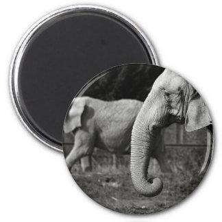 Asian Elephants magnet Refrigerator Magnet