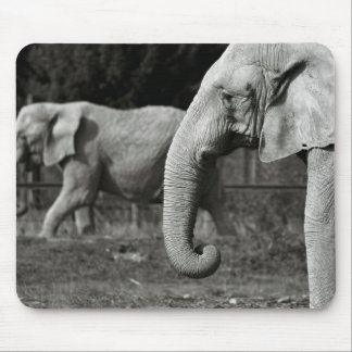 Asian Elephants Mouse Pad