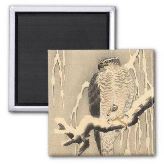 Asian Goshawk Painting Magnet
