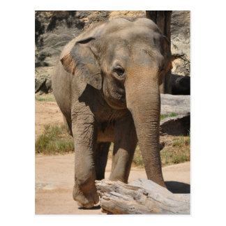 Asian Gray Elephant Post Card