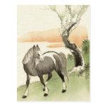 Asian Horse Vintage Postcard