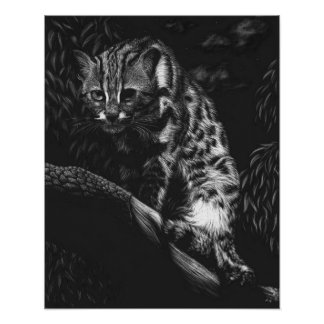 Asian Leopard Cat in a Tree Poster