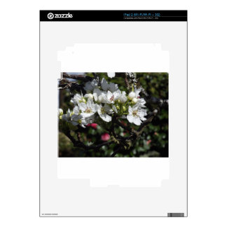 Asian Pear Blossoms iPad 2 Decals
