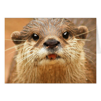 Asian Small Clawed Otter Card