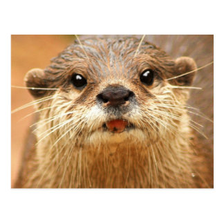 Asian Small Clawed Otter Postcard