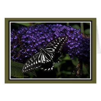 Asian Swallowtail: Butterfly Card