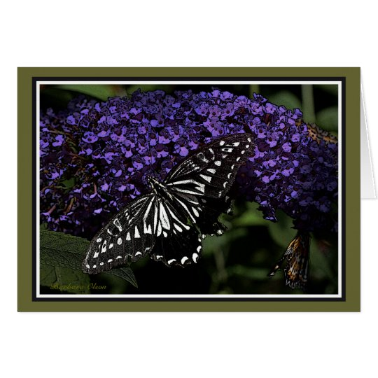 Asian Swallowtail: Butterfly Card
