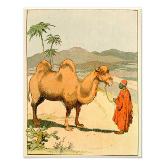 Asian Two Hump Camel Photo Print