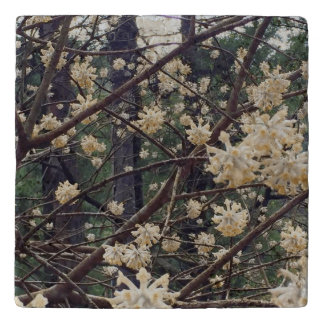 Asian Viburnum Flower Travertine Stone Trivet