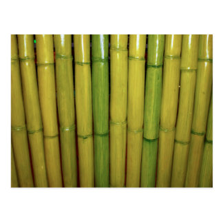 Asian Zen Green Bamboo Stalks Botanical Photo Postcard