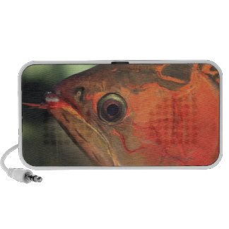 Asiatic arowana laptop speaker