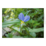 Asiatic Dayflower (Commelina communis) Greeting Card