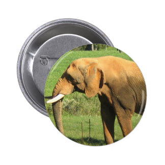Asiatic Elephant  Button
