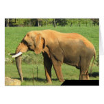 Asiatic Elephant  Greeting Cards