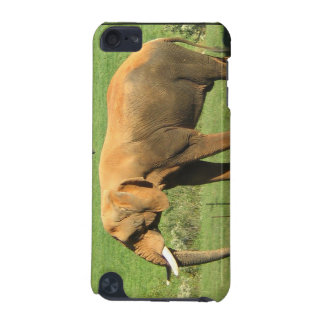 Asiatic Elephant  iTouch Case iPod Touch (5th Generation) Case