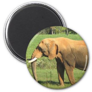 Asiatic Elephant  Magnet Fridge Magnet