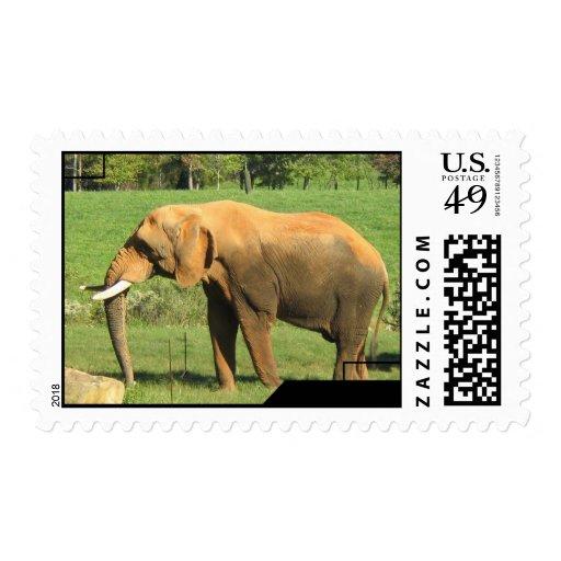 Asiatic Elephant Postage Stamp