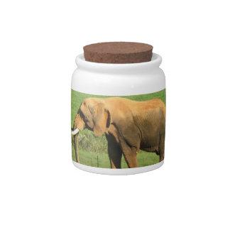 Asiatic Elephants Candy Jar