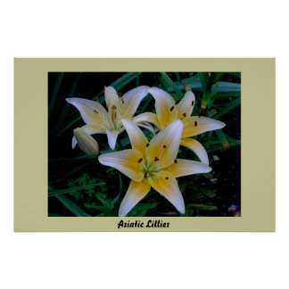 Asiatic Lillies Posters