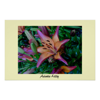 Asiatic Lilly Posters