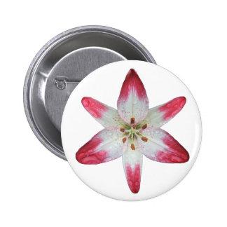 Asiatic Lily 'Lollipop' ~ button