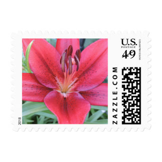 Asiatic Lily Postage