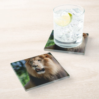 Asiatic Lion of Iran Glass Coaster