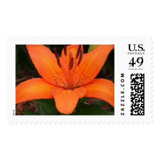 Asiatic Orange Lily Postage