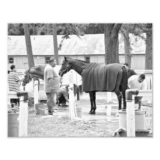 Asilo del caballo foto