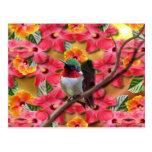 Asilo del colibrí tarjeta postal