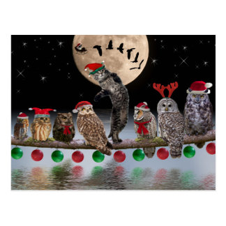 Asio dancing with Owls on Christmas Eve Post Cards