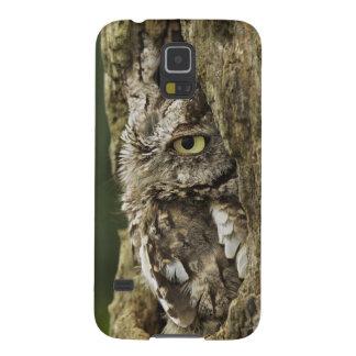 Asio gris del este del Otus de la fase del búho de Carcasa Para Galaxy S5