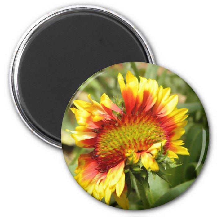 Askew 2 Inch Round Magnet