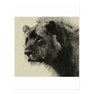 Aslan the king  Hand Drawing Postcard