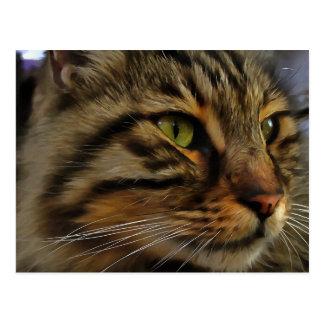 Aslan The Long Haired Tabby Cat Postcard