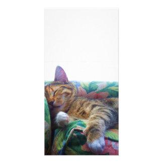 Asleep in the Sun Photo Cards