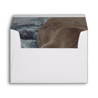 Asleep on the Rocks (Sea Lion) Envelope