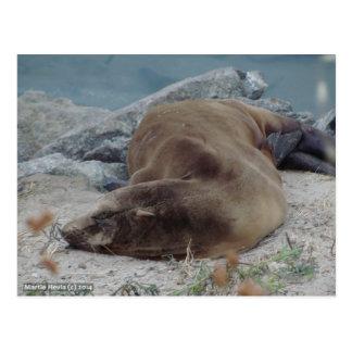 Asleep on the Rocks (Sea Lion) Postcard