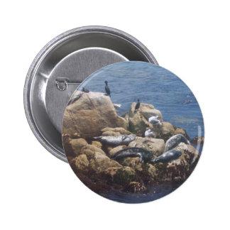 Asolear el botón de los leones marinos pin