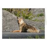 Asolear el coyote tarjeta de felicitación