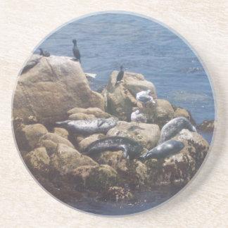 Asolear el práctico de costa de los leones marinos posavasos para bebidas