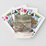 Asolear la ardilla de tierra baraja cartas de poker