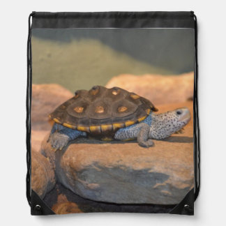 Asolear la tortuga mochila
