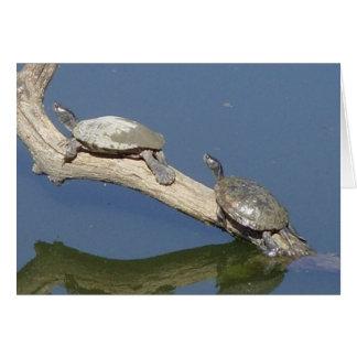 Asolear la tortuga Ozarks del agua Tarjeta De Felicitación