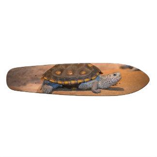 Asolear la tortuga tabla de patinar