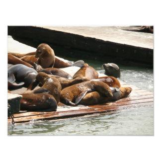 Asolear leones marinos en San Francisco Fotografía