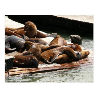 Asolear leones marinos en San Francisco Tarjeta Postal