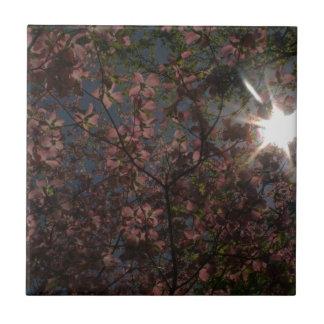 asolee la estrella a través de un árbol con las azulejo cuadrado pequeño