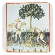 Asparagus Pickers, 13th century Square Sticker