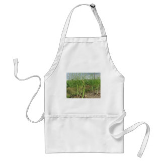 Asparagus shoot just before becoming woody adult apron
